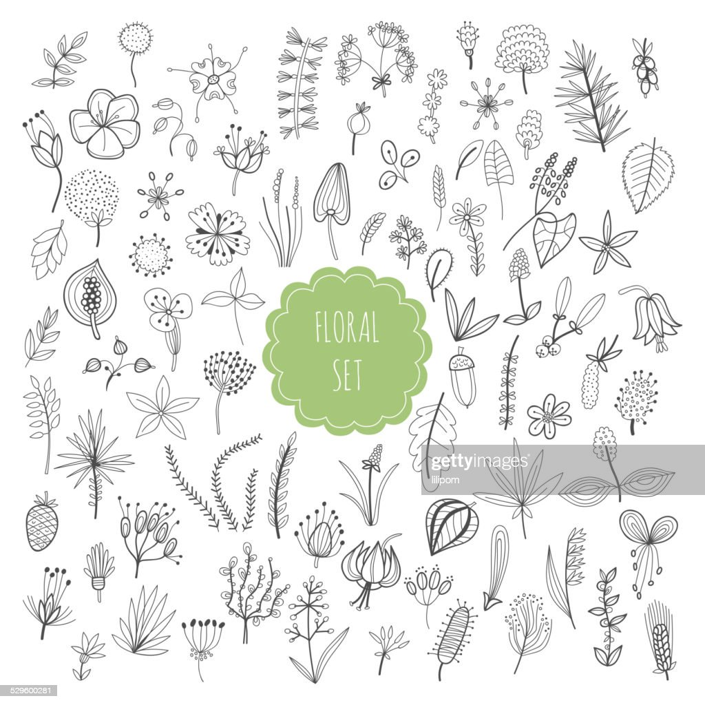Floral set, plants and herbs