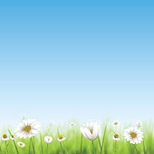 Floral spring background with chamomiles.