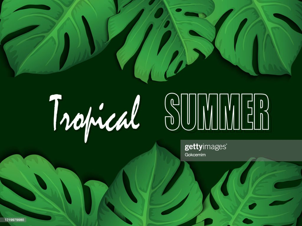 Floral Tropical Summer Background With Monstera Leaves Summer Tropical Leaf Background With Exotic Palm Leaves Party Flyer Template Handwriting Lettering Sale Banner Poster With Palm Leaves Jungle Leaf And Handwriting Lettering High Res Blue, red, and pink swiss cheese leaves print textile. floral tropical summer background with monstera leaves summer tropical leaf background with exotic palm leaves party flyer template handwriting lettering sale banner poster with palm leaves jungle leaf and handwriting lettering high res