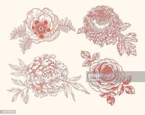 floral vignettes - antique stock illustrations