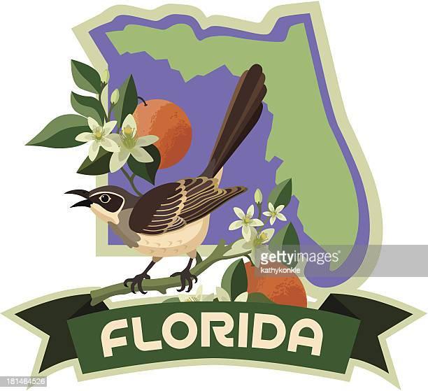florida state bird and flower - mockingbird stock illustrations, clip art, cartoons, & icons