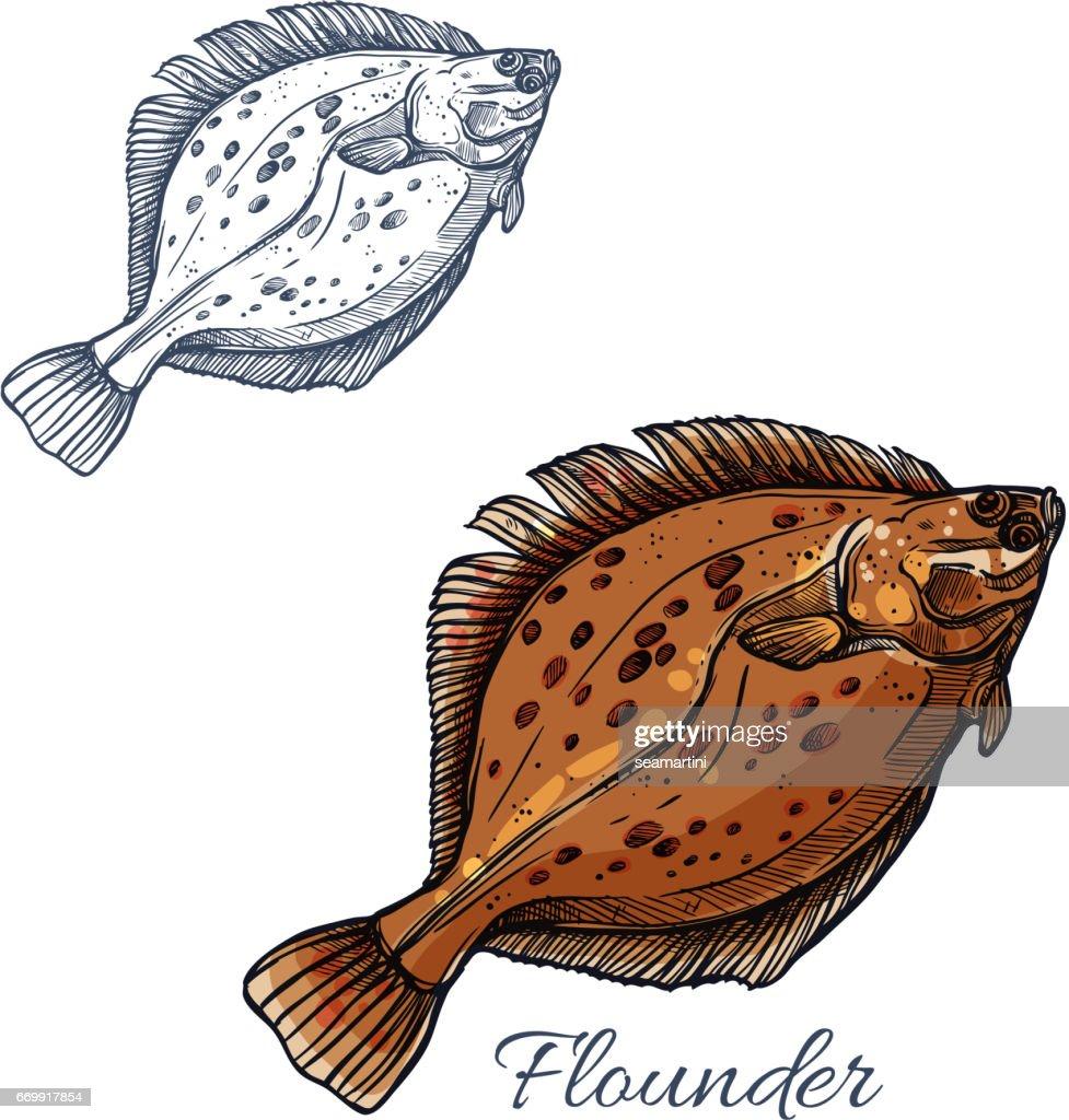 Flounder flatfish sketch for seafood design