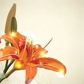 Flowe background. Lily blossom
