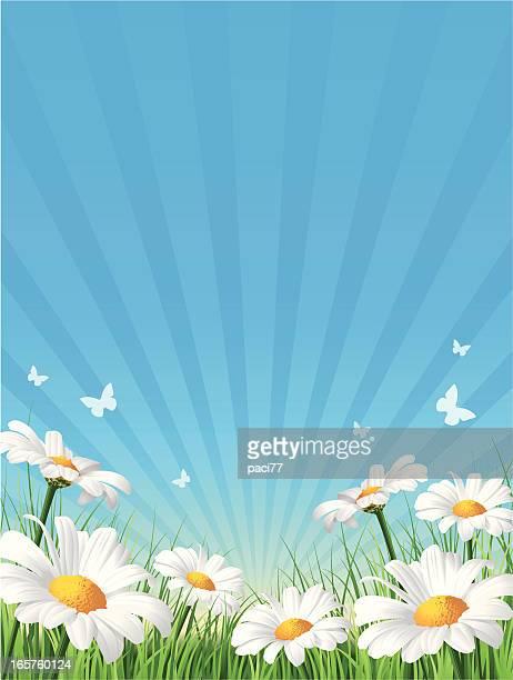 flower background - solar flare stock illustrations, clip art, cartoons, & icons
