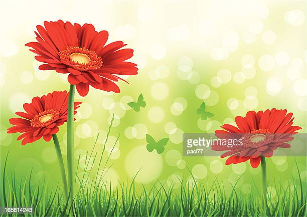flower background - gerbera daisy stock illustrations, clip art, cartoons, & icons