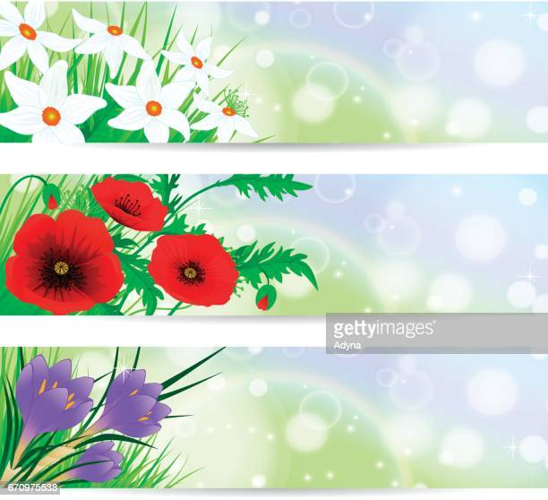 flower banner - narcissus mythological character stock illustrations, clip art, cartoons, & icons