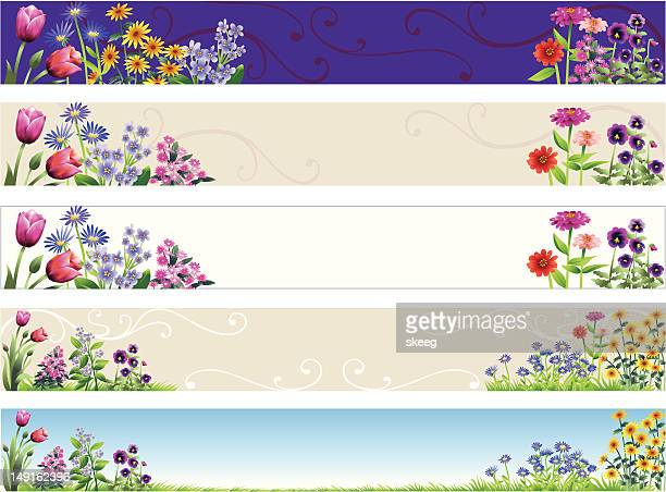 flower banners - sweet william flower stock illustrations, clip art, cartoons, & icons