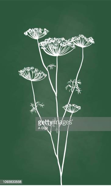 flower buds dried - parsnip stock illustrations, clip art, cartoons, & icons