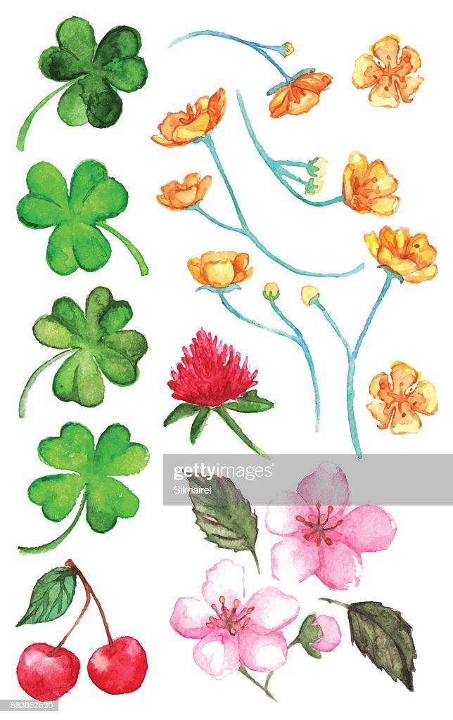 Flower clover cherry berry buttercup set clip art isolated vector