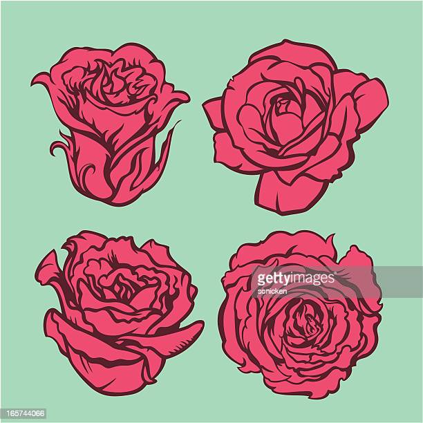 flower collection - rosa stock illustrations