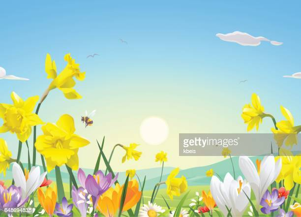 flower field in the morning - wildflower stock illustrations