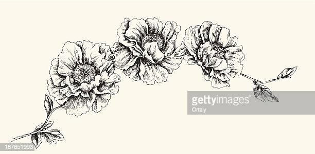 illustrations, cliparts, dessins animés et icônes de fleur tête - pivoine