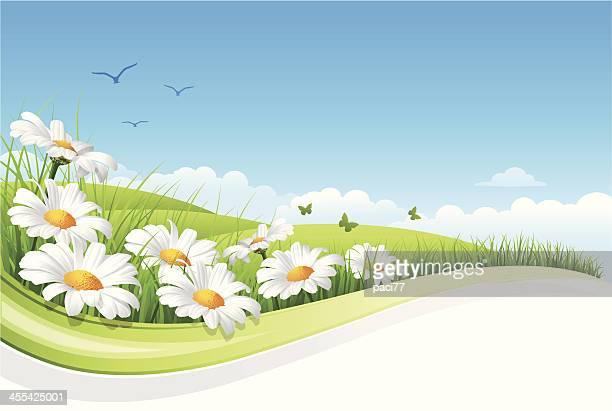 ilustraciones, imágenes clip art, dibujos animados e iconos de stock de paisaje flor - planta de manzanilla