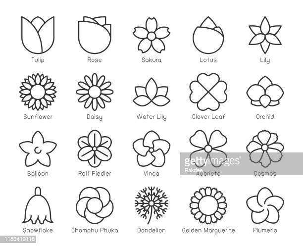 blume-light line icons - thailand stock-grafiken, -clipart, -cartoons und -symbole