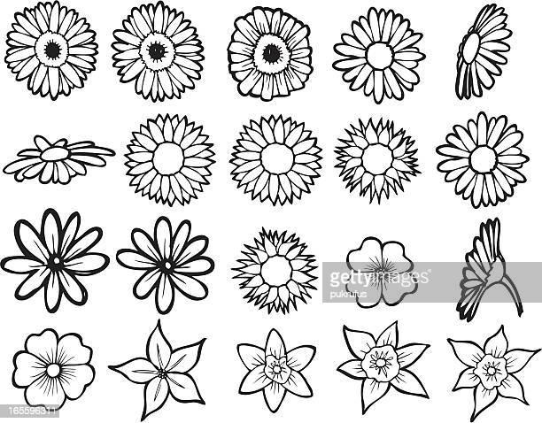 flower line art - sunflower stock illustrations, clip art, cartoons, & icons