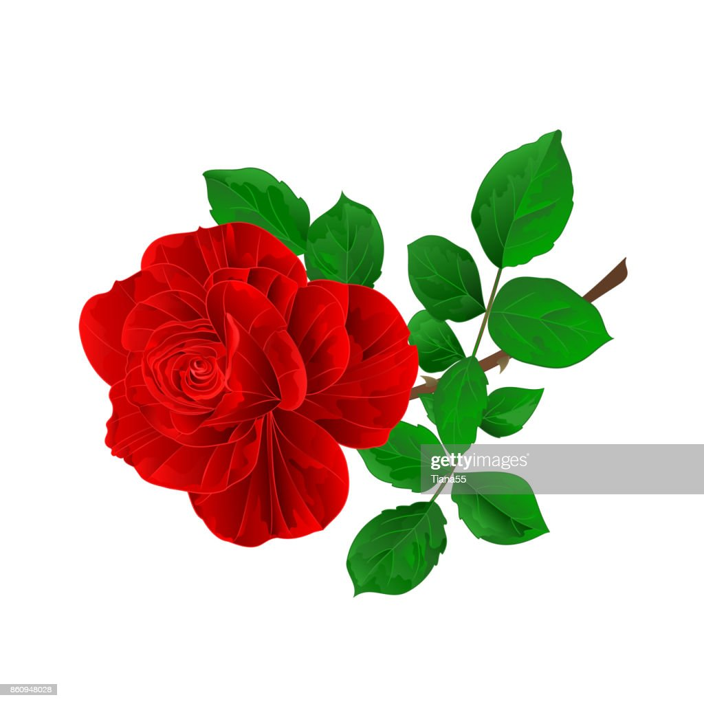 Flower red rose and leaves vintage on a white background  vector illustration editable