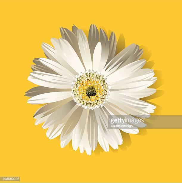 flower - gerbera daisy stock illustrations, clip art, cartoons, & icons