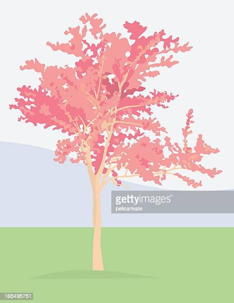 ilustraciones, imágenes clip art, dibujos animados e iconos de stock de cornejo cherry tree - cherry tree