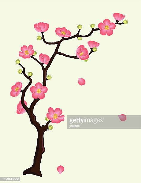 flowering quince or cherry blossoms - arrowwood stock illustrations, clip art, cartoons, & icons