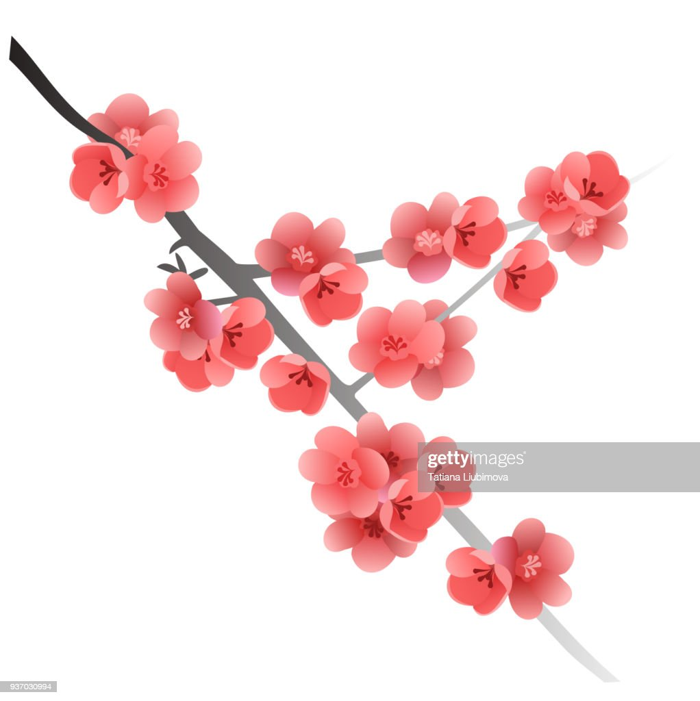 Flowering quince tree branch (Chaenomeles japonica).