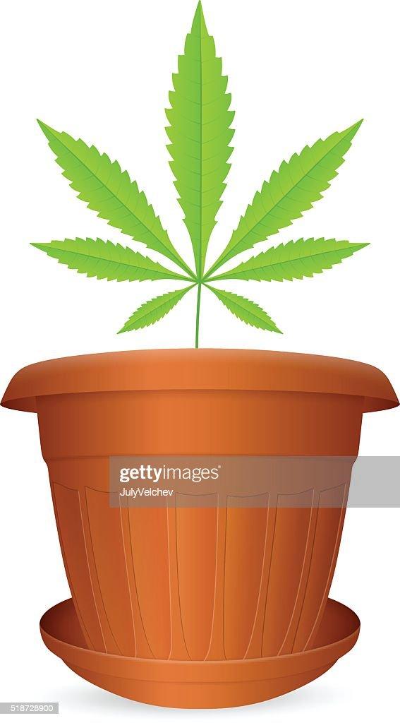 flowerpot marijuana leaf