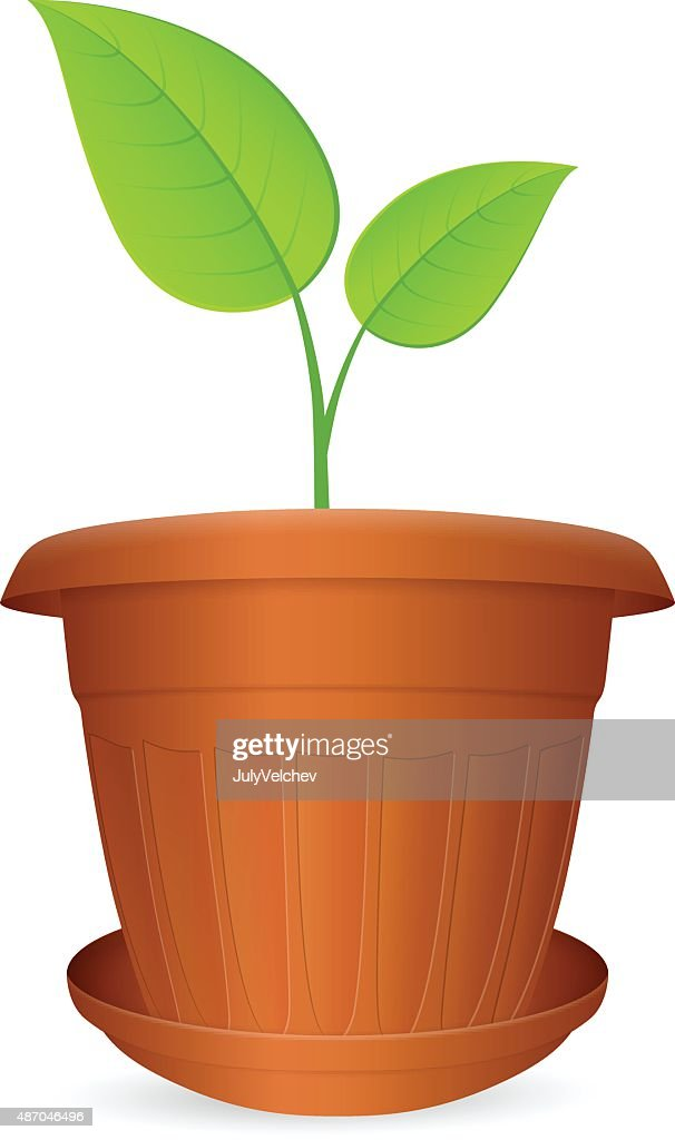 flowerpot plant