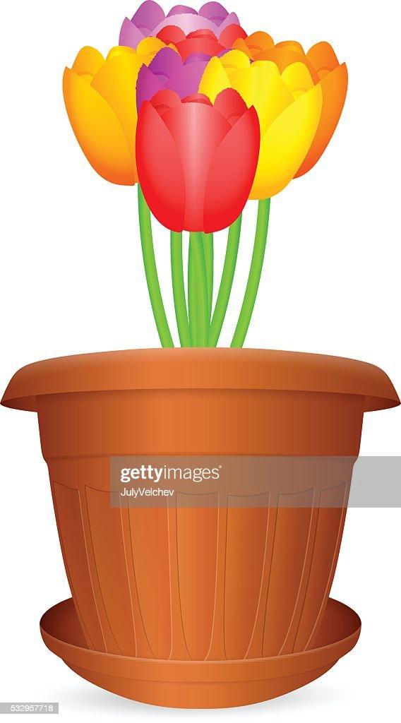 flowerpot tulips