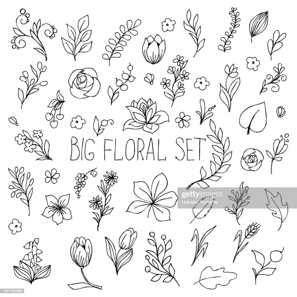 flowers, berries and leaves collection. Floral hand drawn vintage set. Sketch art illustration