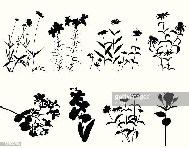 flowers blooming vector silhouette - rose flower stock illustrations, clip art, cartoons, & icons
