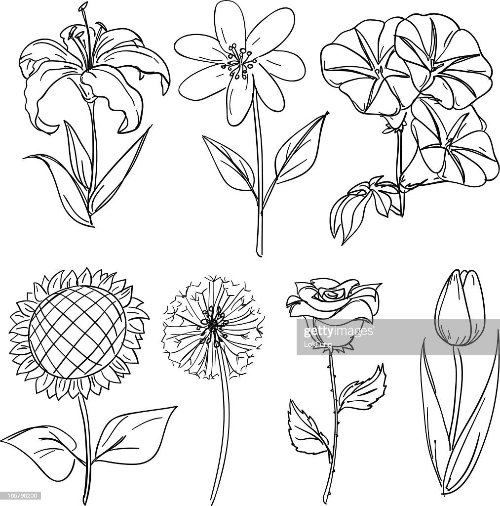 Flowers collection in black and white : stock illustration