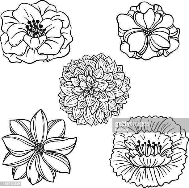 flowers collection in black and white - single flower stock illustrations
