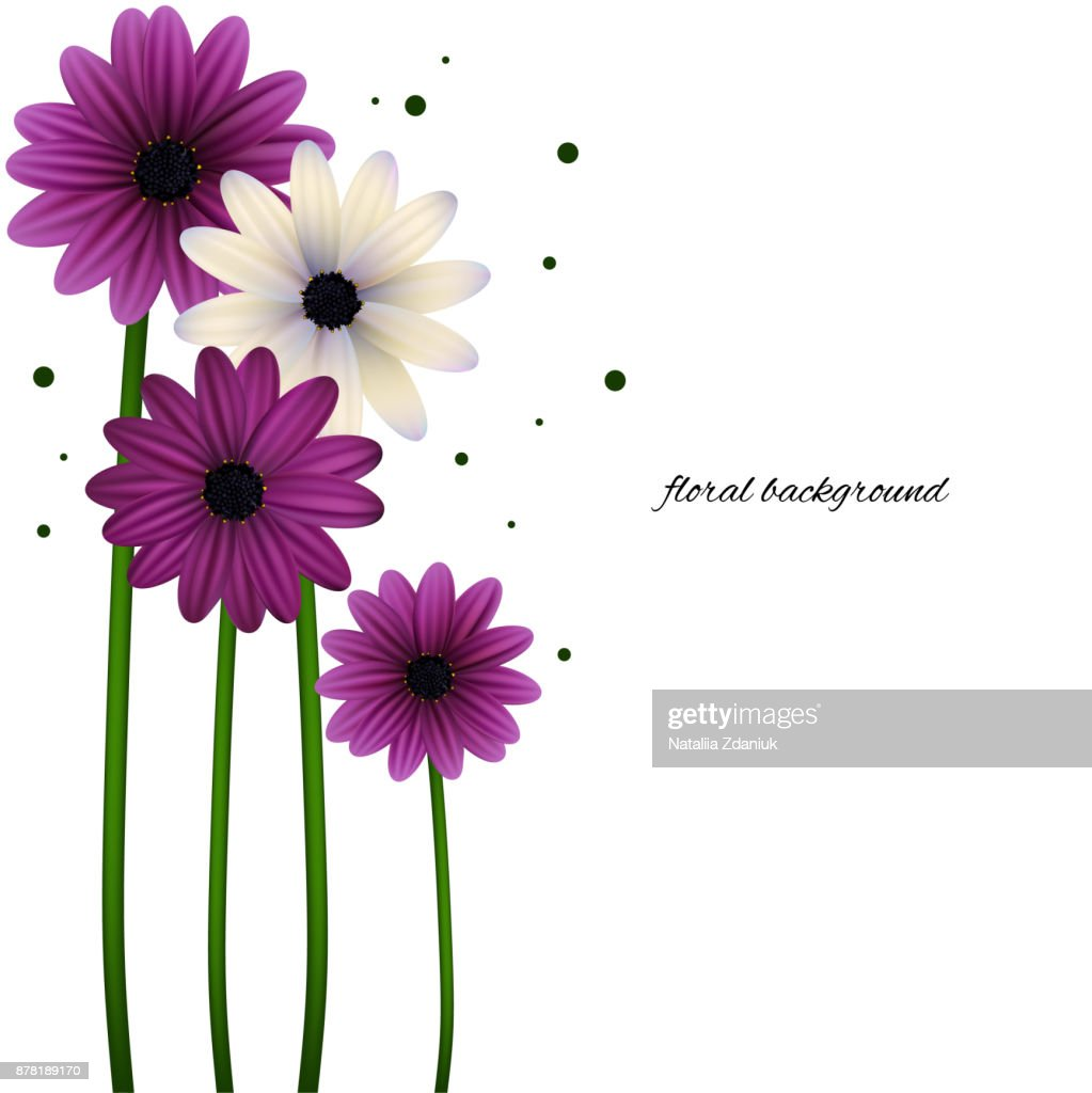 Blumen Gänseblümchen Floraler Hintergrund Vektorhintergrund Rahmen ...