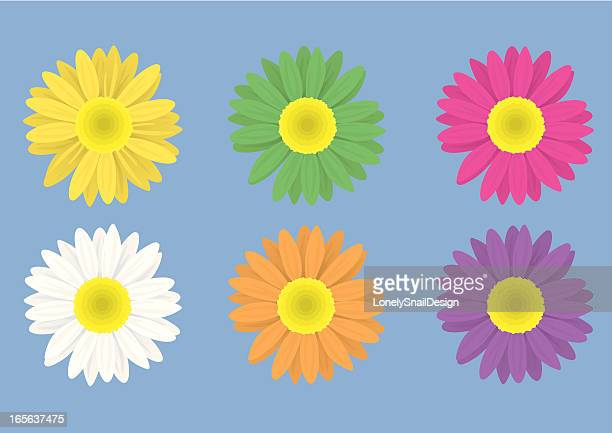 flowers front - gerbera daisy stock illustrations, clip art, cartoons, & icons