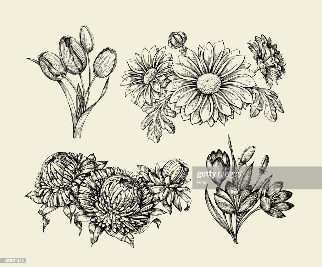 Flowers. Hand drawn sketch flower, tulip, astra, aster, crocus, chrysanthemum