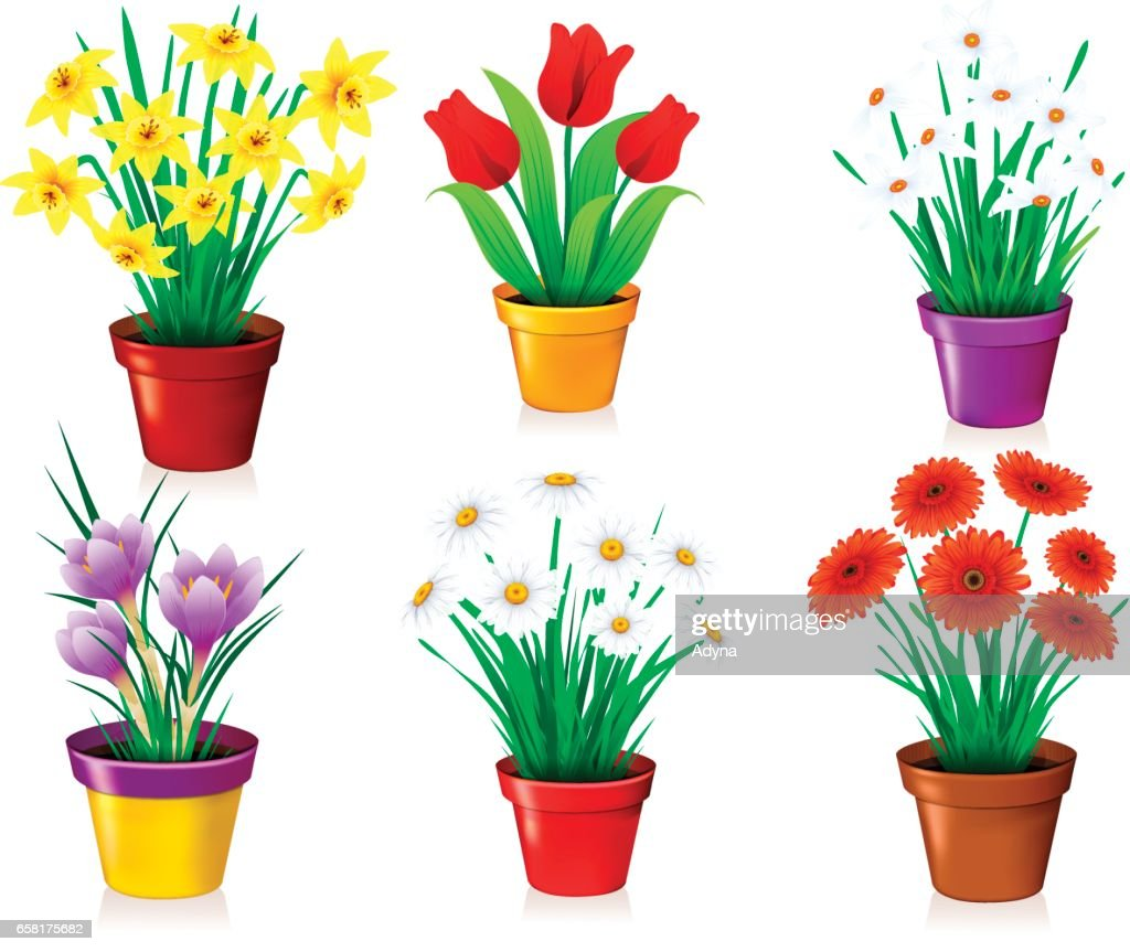 Flowers in Pot  sc 1 st  Getty Images & 30 Top Flower Pot Stock Illustrations Clip art Cartoons \u0026 Icons ...