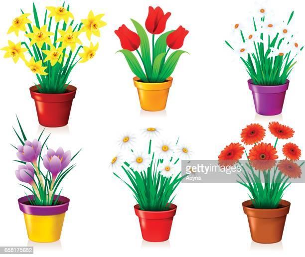 30 Top Flower Pot Stock Illustrations, Clip art, Cartoons