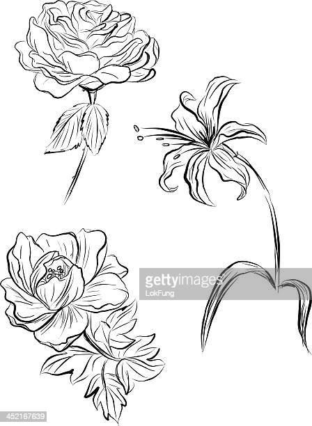 flowers in sketch style - single flower stock illustrations