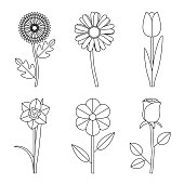 Flowers line drawings