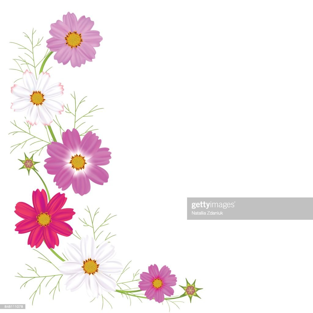Flowers Of Cosmos A Beautiful Wreath Bright Colors Of White And Pink
