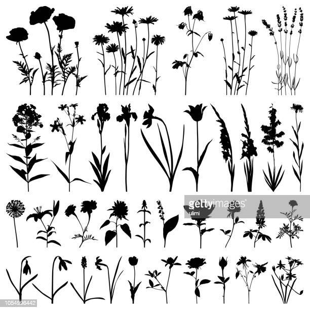 flowers silhouette, vector images - poppy stock illustrations, clip art, cartoons, & icons