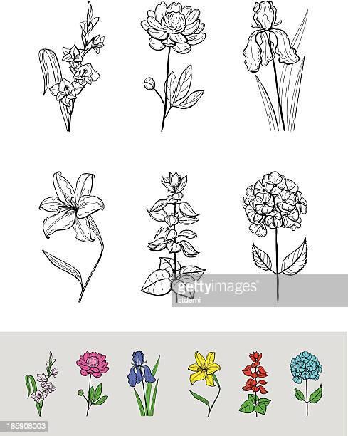 illustrations, cliparts, dessins animés et icônes de des fleurs - pivoine