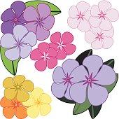 Flowers - Vinca (Vector)