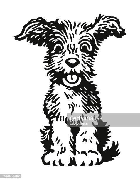 flauschige hund - unordentlich stock-grafiken, -clipart, -cartoons und -symbole