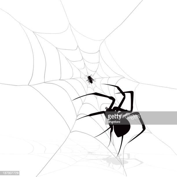 fly in a web with spider, black and white image - black widow spider stock illustrations, clip art, cartoons, & icons