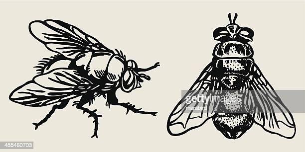 illustrations, cliparts, dessins animés et icônes de fly - insecte