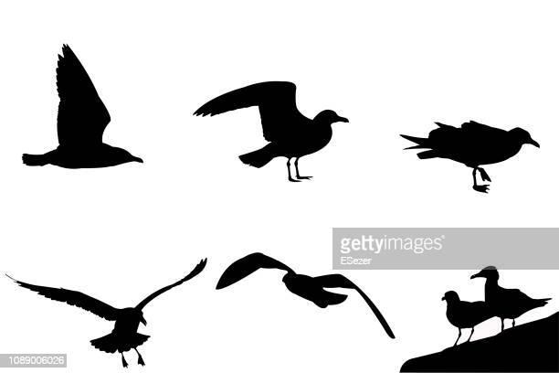 飛行とカモメのベクトルを立っています。 - 海洋性の鳥点のイラスト素材/クリップアート素材/マンガ素材/アイコン素材
