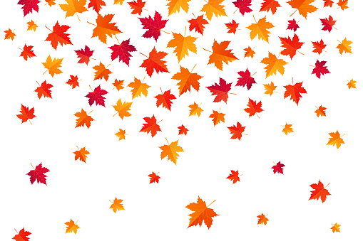 Flying Autumn Maple Leaves - Abstract background - vector illustration - gettyimageskorea