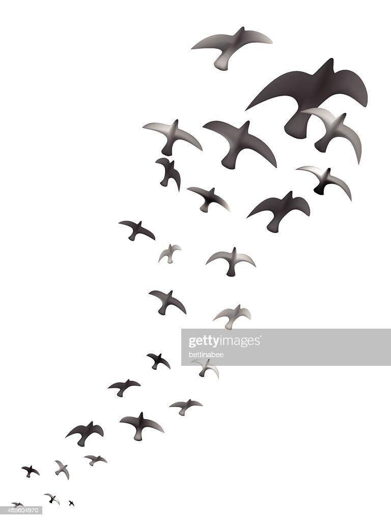 flying bird silhouettes - vector illustration