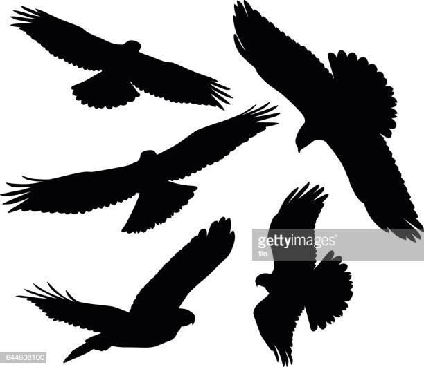 flying birds of prey silhouettes - peregrine falcon stock illustrations, clip art, cartoons, & icons