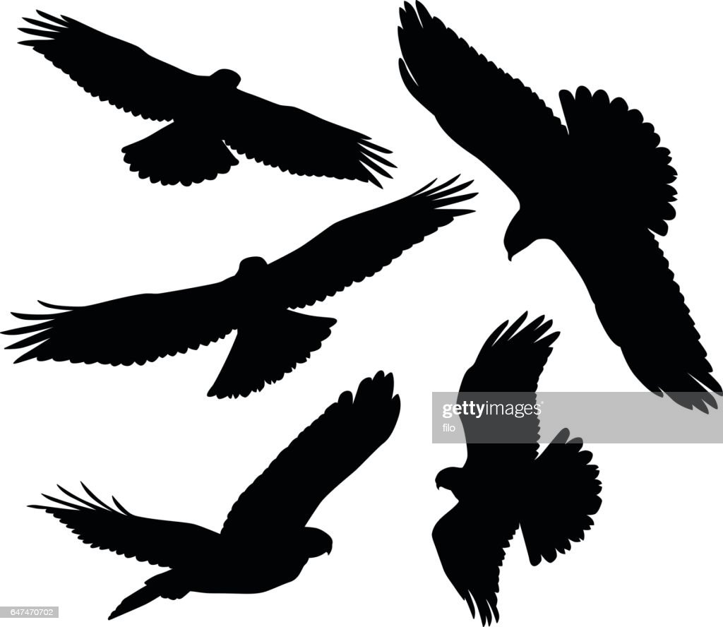 Flying Birds of Prey Silhouettes : stock illustration